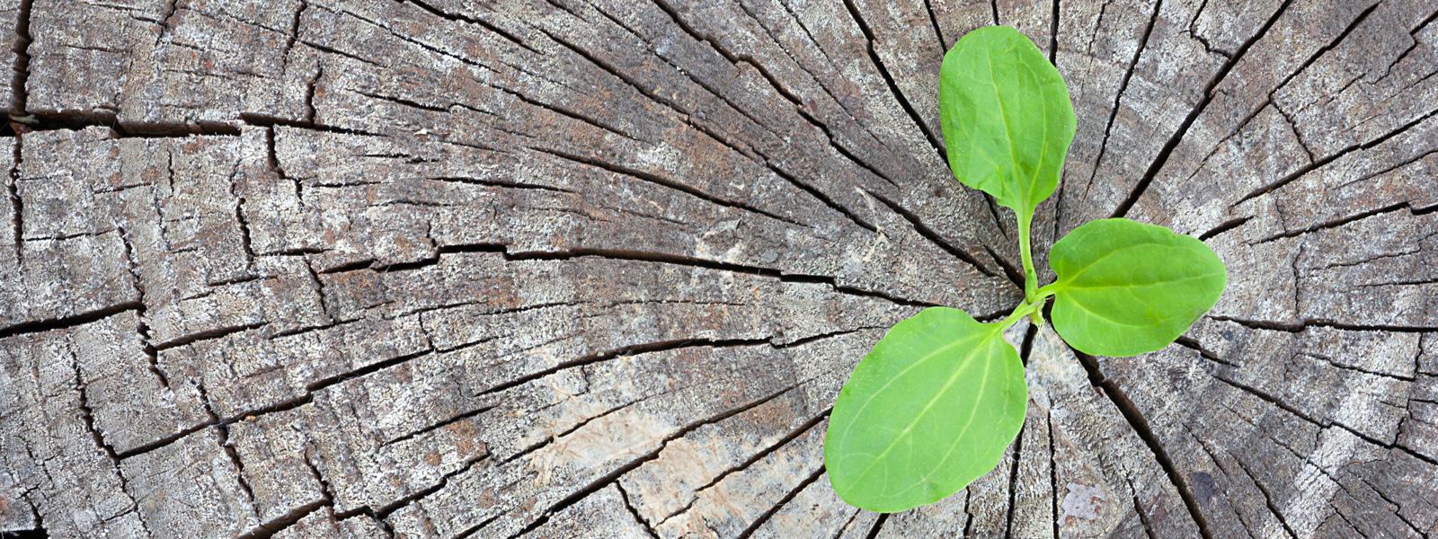 Umweltfreundliche Druckmedien – grüner Pflanztrieb in Baumstumpf