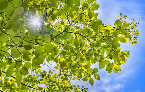 Umweltfreundliche Druckmedien - Blick in gruene Baumkrone vor blauem Himmel