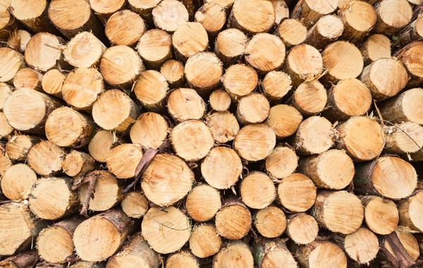 Umweltfreundliche Druckmedien - Stapel abgesägte Baumstämme, Ansicht der Schnittflächen