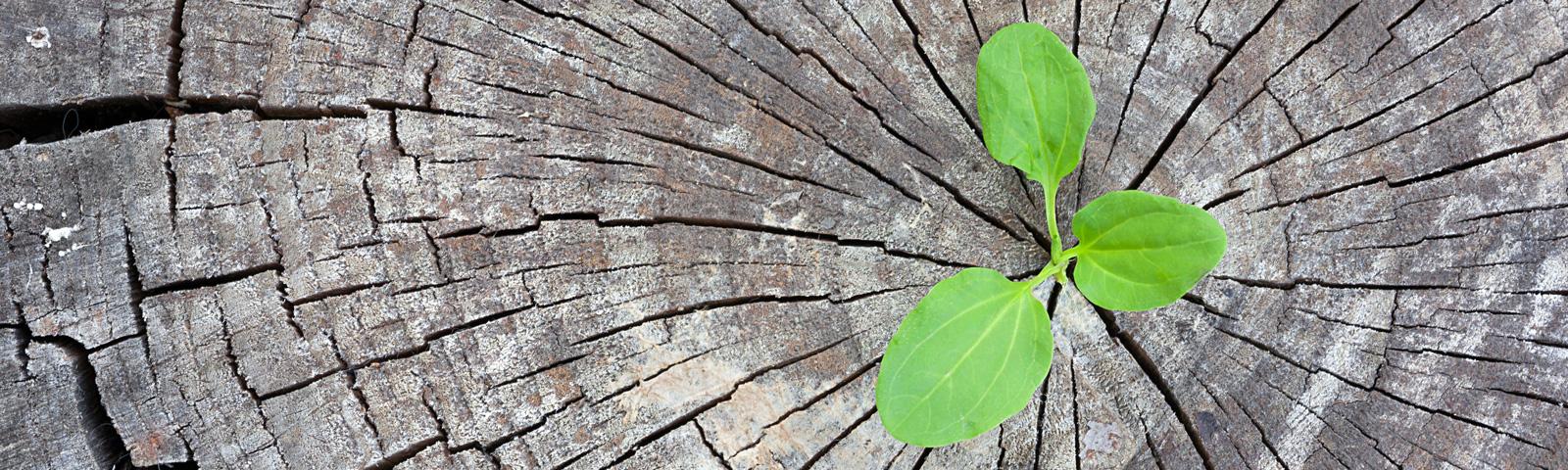 Umweltfreundliche Druckmedien – gruener Pflanztrieb, waechst aus grauem Baumstumpf
